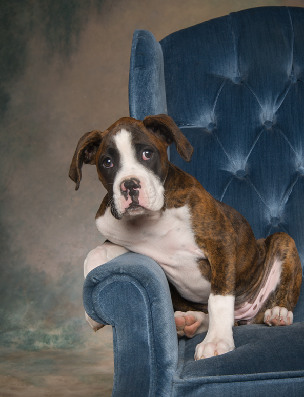 Hudson Valley Dog Photography